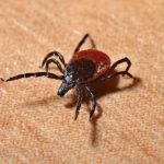 Evers signs off on Lyme disease bills