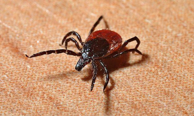 Evers signs off on Lyme disease bills